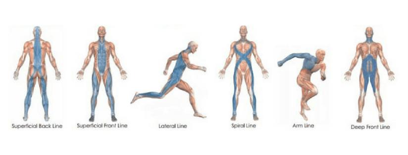 fascia-lines
